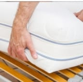 bed bug inspection Caledon